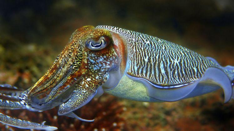 www.fastcoexist.com-cuttlefish-camouflage